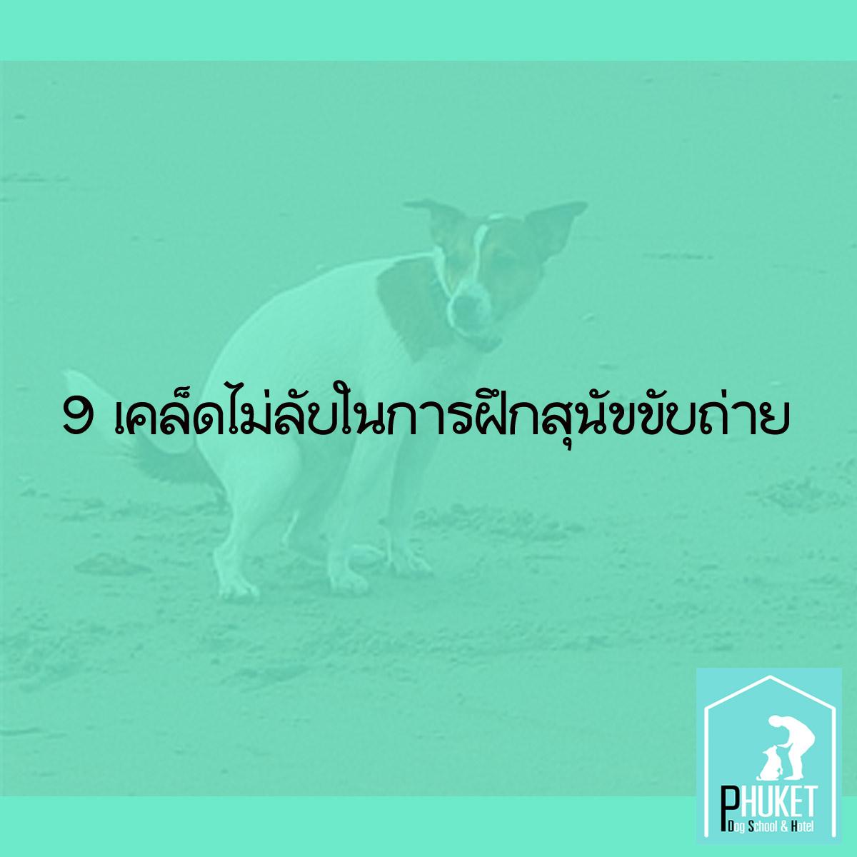 9 เคล็ดไม่ลับในการฝึกสุนัขขับถ่าย 0